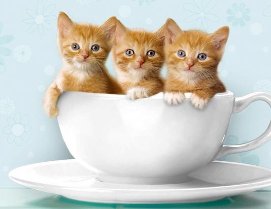 Экономьте время и деньги, чтобы играть с котятами