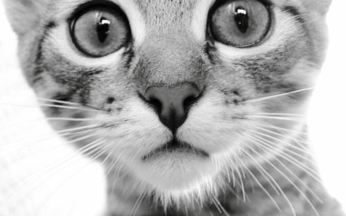 Котики - это лучшие консультанты