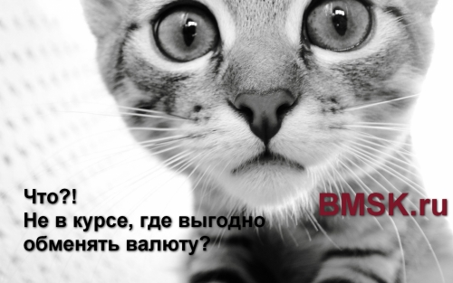 Котики помогут быстро найти выгодный курс